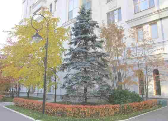 Ул Маршала Соколовского Москва. Осень